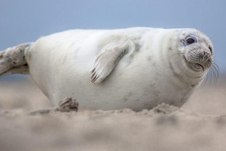 Zeehondentocht Texel - Het Sop Speedy